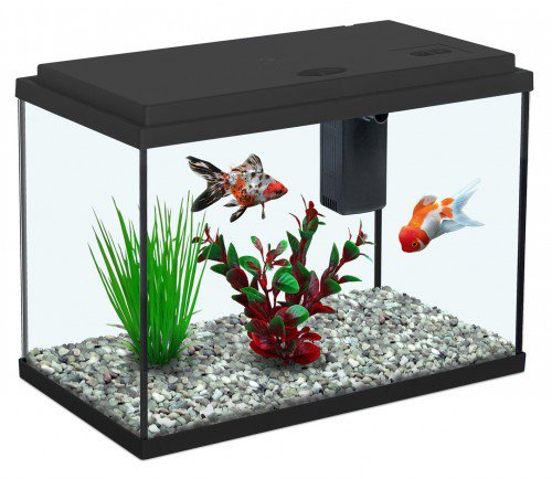 All pond solutions aquatlantis funny fish 35 aquarium fish for Aquarium aquatlantis
