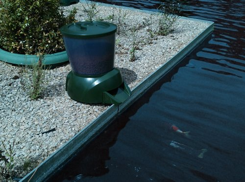 Automatic pond fish feeder pets lovers top store for Fish feeder for pond