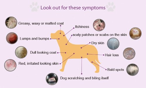 Food For Dogs With Itchy Skin Uk