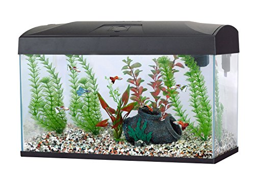 Fish R Fun Rectangular Aquarium 54 Litre 58 5 X 30 5 X