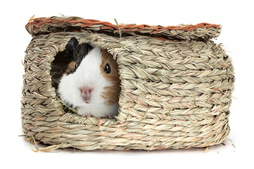 Living World Green Reed Hut Guinea Pig House Pets Lovers Top Store