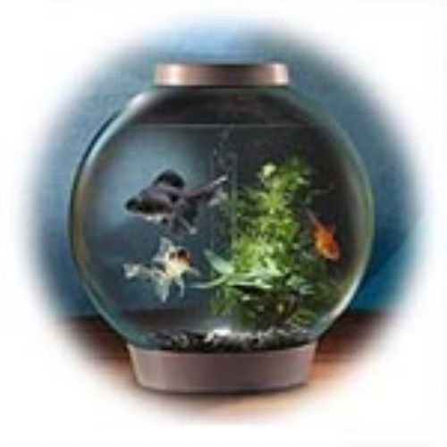 biorb classic aquarium 40 x 42 cm 30 litre black intelligent 24hr led light pets
